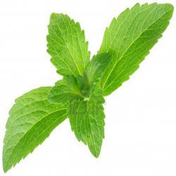 Stevia Leaves -  Stevia Rebaudiana