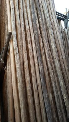 Timber Products - Shuttering Plywood Manufacturer from Ahmedabad
