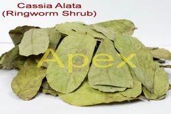 Cassia Alata