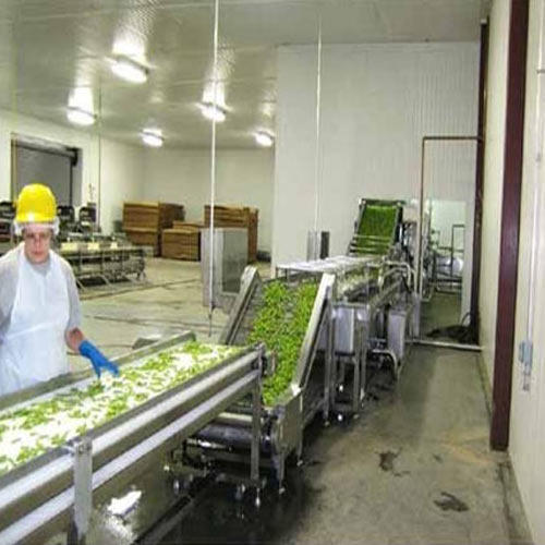 Vegetable Processing Plant At Rs 62 Kilogram S