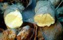 Kasturi Turmeric ( Kasturi Manjal - Amba Haldi)