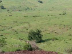 Land, Size/ Area: 135