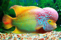 Ornamental Fish Saha Fish Farm Manufacturer In Bally Howrah