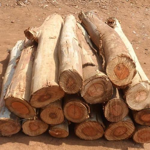 wood logs mother land impex wholesaler in anna nagar west