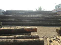 American Pine Logs