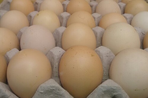Infertile Eggs - Bakery Egg Wholesale Supplier from Hajipur