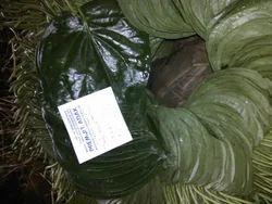 Bagerhat Betel Leaf