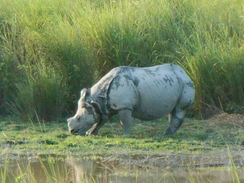 Kaziranga Packages (2 Days 1 Night) in Jorhat, Assam Tours