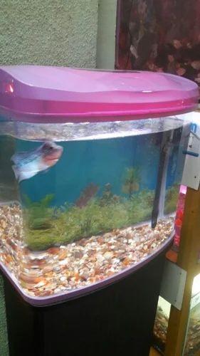 Fancy Fish Tanks 4 feet fish tank with filter & aquarium fish tank wholesale