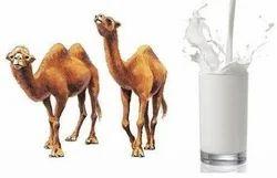 Camel Milk, Packaging Type: Packet