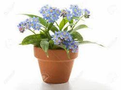 Fancy Flower Pot