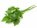 Parsley Herb