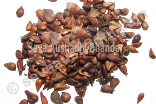 Pyrus Cydonia - View Specifications & Details of Quince Seed by Seva