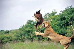 Gujarat Wildlife Tours 7n/8d