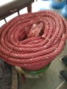 Red Loading Plastic Rope