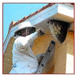 Bee Hive Removal Service