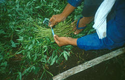 Planting Materials Selection Service
