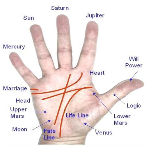 Male Palm Reading Services Rs 500 Person Shree Jyotish Kendra