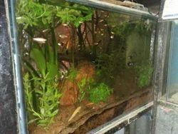Tetra Variety Fish