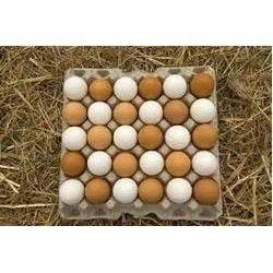Chicken Healthy Eggs