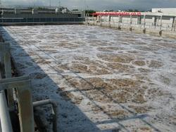 Active Bacteria for Industrial Waste Water Treatment