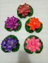 5 Colours Fulwari Floating Lotus