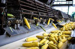 Corn Cob Processing Plant
