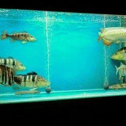 Manufacturer Of Aquarium Stunning Aquarium By King Aquarium Thrissur