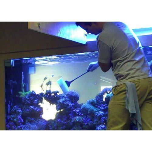 Marine Aquariums Maintenance Service in Pune, The Blessings