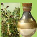 Organic Sugandh Mantri Oil