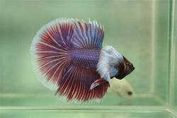 Saler Aquarium Store | Aquarium Fish In Pune Aquarium Machhali Suppliers Prices In Pune