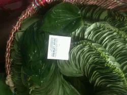 Fresh Betel Leaf