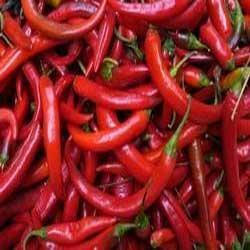 Red Hot Indian Chili Pepper