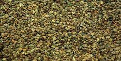 Ajmod Celery Seeds Celery Powder
