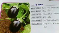F1 Baigan seeds