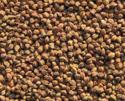 Dollar Indian Desi Chana, High In Protein, Packaging Size: 50 Kg