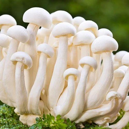 mushroom के लिए इमेज परिणाम