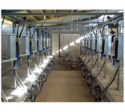 12 Point Herringbone Milking Parlor