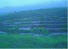 Grassland Development