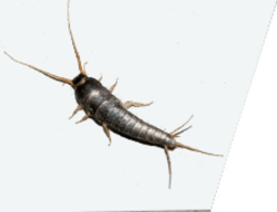 Silverfish free dating sight for over50