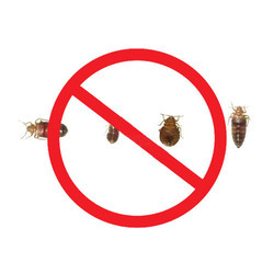 Bed Bug Pest Control Services