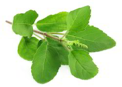 Herbal Natural Tulsi Leaves