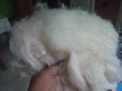 Cotton fiber Raw Kapok Fiber, for Filling Material, Packaging Type: Carton