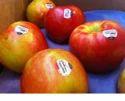 Food Grade Sticker