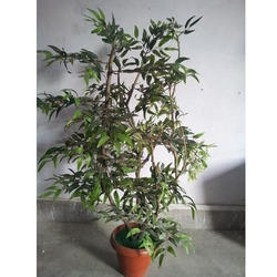 Artificial  Ruscus Plant