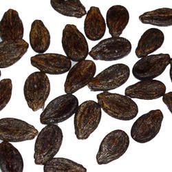 Watermelon Seeds - Wholesale Price for Watermelon Seeds in ...