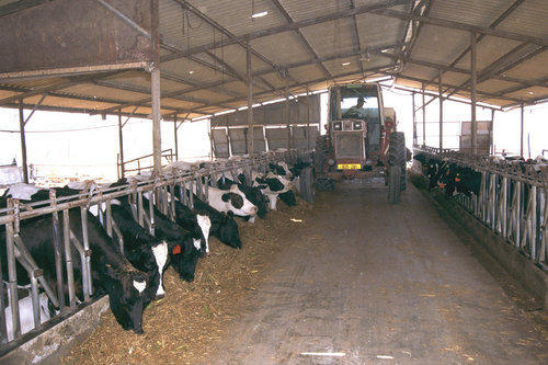 Dairy Farm Shed Cow Farm Shed Cattle Farm Shed Metal