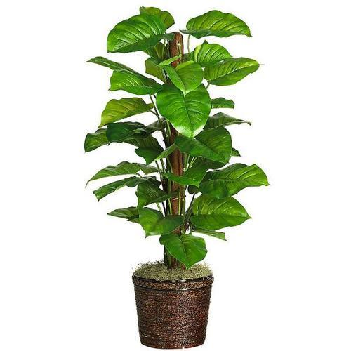 Philodendron Silk Plant