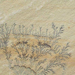 Mint Fossil, for Flooring