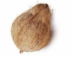 A Grade Husked Coconut, Coconut Size: Medium